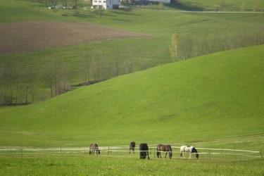 Nachbars Pferde