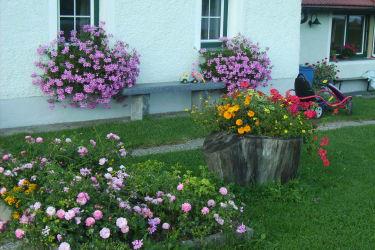 Unsere Blumenpracht