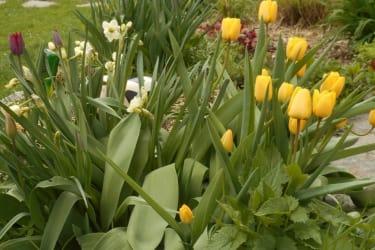 Frühling am Nussbaumerhof
