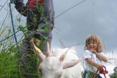 Ziegen ausführen am Biohof Schafflhof