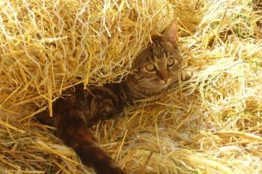 Kätzchen im Stroh