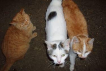 unsere Katzenfamilie