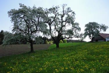 Frühling am Rothstadlerhof