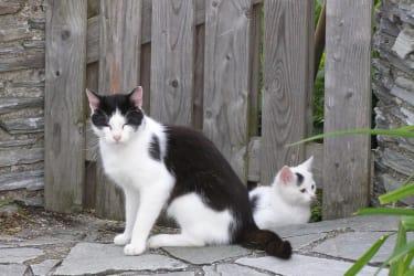 Streichel-Kätzchen