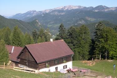 Inselsbacher Alm - unsere Alm am Hengstpass