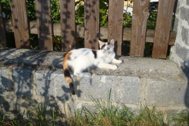 Katze Katy