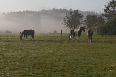 Pferde und Esel