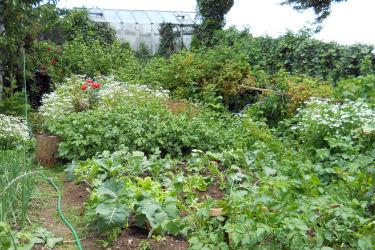 großer Bauerngarten mit Beeren zum Naschen