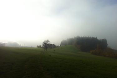Stimmung Nebel - Weide im Hintergrund
