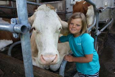 Die Kühe im Außenbereich oder auf der Weide.