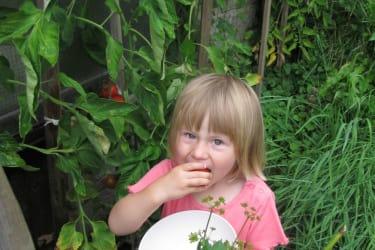 Magdalena verkostet Tomaten