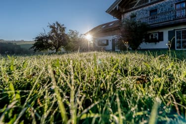 Tau auf dem Gras 2