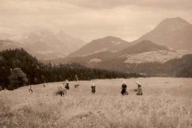 Unsere Vorfahren bei der Kornernte