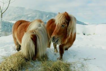 Unsere Ponys Lea und Lillifee