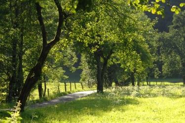 Natur und Ruhe rund um den Hof