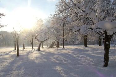 Bäume im Winterkleid