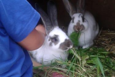 Max und Moritz unsere Hasen