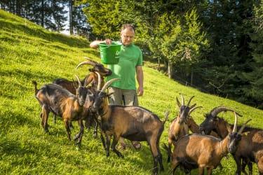 Manfred beim Ziegen füttern
