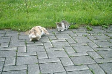 Hase&Katze