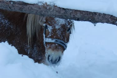 Pauli im Schnee