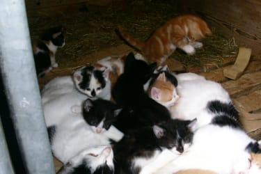 Katzenbabys bei den Katzenmamas