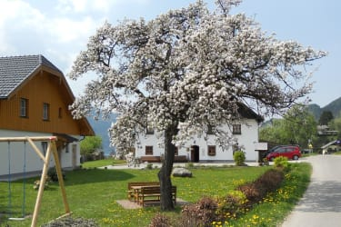 Ein gemüliches Platzerl befindet sich unter unserem alten Apfelbaum
