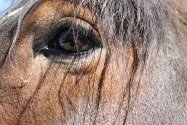 Pferde hautnah