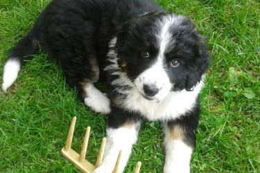 Hund Elli