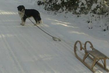 Schlittenfahren mit unserem Hund