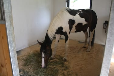 Pferd Mira