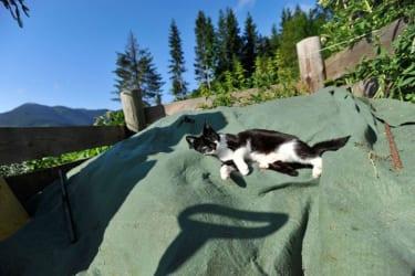 Katze beim Entspannen