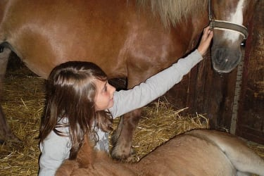 Fanny und Lilli im Stall