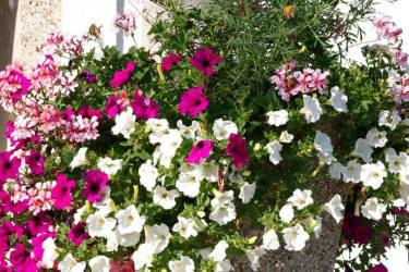 Blumen machen Freude