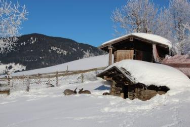 Hasen im Schnee