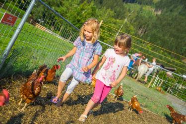 Im Hühnerauslauf