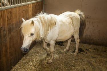 Pony Pauli
