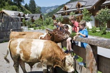 Stier Egon und Kuh Mirli