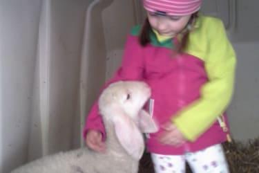 Theresa mit ihrem Schaf