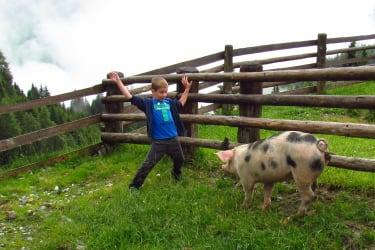 Fangenspielen mit einem Schwein auf der Alm