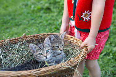 Feriendorf Holzleben Katzen