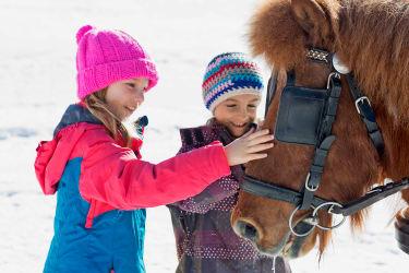 Streicheleinheiten für Kutschenpferd