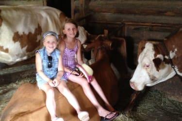 Erlebnis mit Kühen