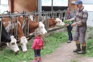 Im Kuhstall füttern