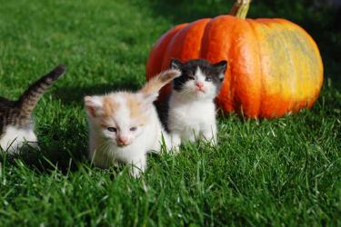 Katzenbabys tollen herum