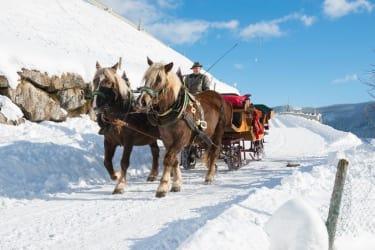 Pferdeschlittenfahrt Kniegut