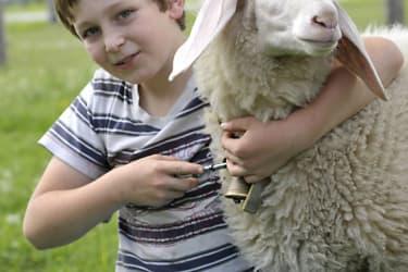 Mama, ich gehe mit dem Lamm spazieren!