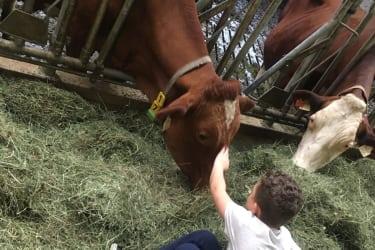 Max streichelt seine Lieblingskuh Regina
