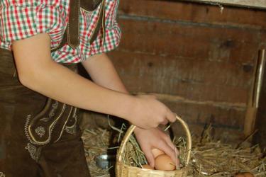 Ohhh, die Eier sind noch warm !