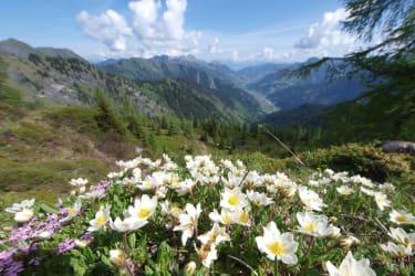 eine Blumenpracht in den Bergen