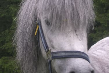 Pony Lola